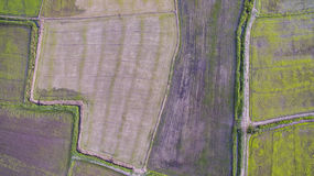 Aerial view of rice paddy in agriculture field Royalty Free Stock Photo