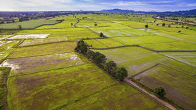 Aerial view of rice paddy field in kanchanaburi thailand Stock Images
