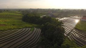 Aerial view of rice`s fields, tropical trees and buildings stock video footage