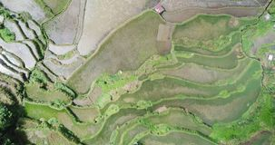 Aerial view of rice terraces at Bangaan Village on the island of Luzon stock footage