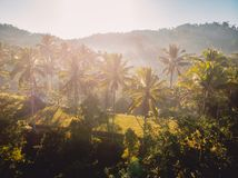 Aerial view of rise terraces with tropical coconut palms in Bali. Aerial view of rise terraces with tropical coconut palms stock photography