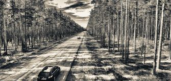 Aerial view of road across the forest.  Stock Photo