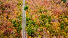 Aerial view of road in autumn forest at sunset. Amazing landscap. E with rural road, trees with red and orange leaves in day Royalty Free Stock Photo