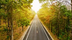 Aerial view of road in autumn forest at sunset. Amazing landscap. E with rural road, trees with red and orange leaves in day Royalty Free Stock Images