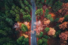 Aerial view of road in beautiful autumn forest Royalty Free Stock Image