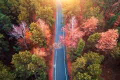Aerial view of road in beautiful autumn forest at sunset Royalty Free Stock Photos