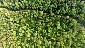 Aerial View Road in the coniferous forest on Lake Baikal, Buryatia, Russia. Bird's-eye view on the drone road in coniferous forest of Lake Baikal Russian stock video footage