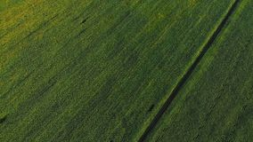 Aerial view of road in the fields. Aerial view of road in the green fields. Aerial view of road in the fields. Aerial view of road in the green fields stock video footage
