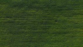 Aerial view of road in the fields. Aerial view of road in the green fields. Aerial view of road in the fields. Aerial view of road in the green fields stock footage