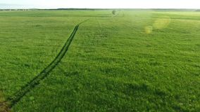 Aerial view of road in the fields. Aerial view of road in the green fields stock video