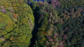 Road in a forest, view from above stock video