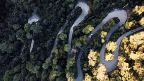 Aerial view of a road in the forest stock photo
