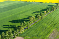 Aerial view of  road and green harvest fields Royalty Free Stock Photo