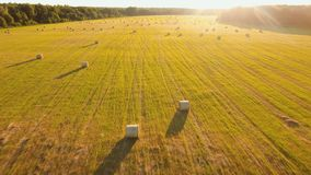 Rolls of haystacks on the field stock footage