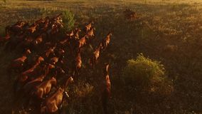 Aerial view of running horses. royalty free stock photos