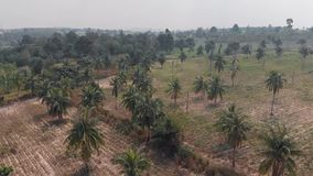 Aerial view of rural agricultural fruit fields and acerola groves, coconut palms and farm buildings stock footage