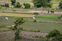 Aerial view of rural area Stock Photos