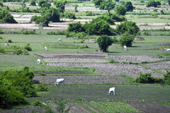 Aerial view of rural area Stock Images