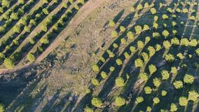 Aerial View Rural Landscape. Alentejo, Portugal stock video