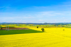 Aerial view rural landscape with blooming rape at the north Gree Stock Photography