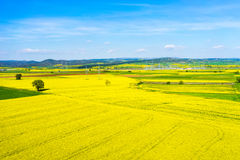 Aerial view rural landscape with blooming rape at the north Gree Royalty Free Stock Photography
