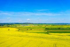 Aerial view rural landscape with blooming rape at the north Gree Royalty Free Stock Image
