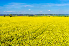 Aerial view rural landscape with blooming rape at the north Gree. Ce Royalty Free Stock Photos