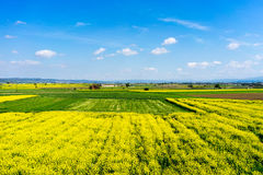 Aerial view rural landscape with blooming rape at the north Gree Stock Photo