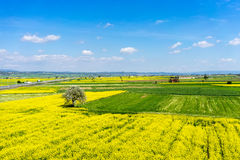 Aerial view rural landscape with blooming rape at the north Gree. Ce Royalty Free Stock Photography