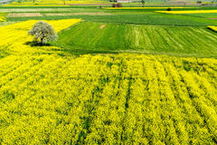 Aerial view rural landscape with blooming rape at the north Gree Stock Photos