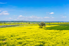 Aerial view rural landscape with blooming rape at the north Gree. Ce Stock Images