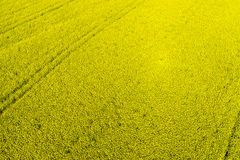Aerial view rural landscape with blooming rape at the north Gree. Ce Stock Photos