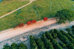 Aerial view of rural road with a colored tree. stock photo
