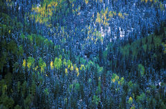 Aerial view of San Juan National Forest, Autumn, CO Royalty Free Stock Photos