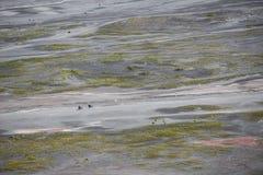 Aerial view of sea of sand inside Bromo Tengger Caldera Stock Photos
