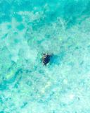Aerial view of a sea turtle swimming through the blue ocean and wave stock images