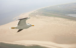 Aerial view of seagull flying above beach Stock Photography