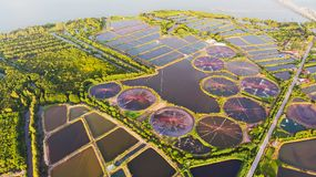 Aerial view of shrimp farm and air purifier in Thailand. Continuous growing aquaculture business is exported to the international. Market royalty free stock photos