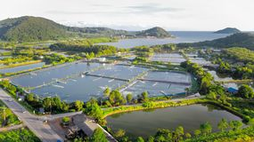 Aerial view of shrimp farm and air purifier in Thailand. Continuous growing aquaculture business is exported to the international. Market stock photo
