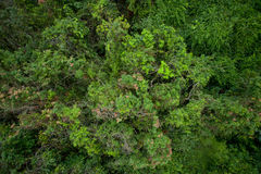 Aerial view of shrub Stock Photography