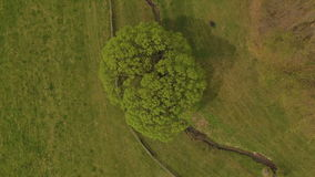 Aerial view single tree in green meadow stock video footage