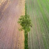 Aerial view of a single tree taken at an angle from a great height at the border of two different farmland areas in Germany near G Stock Photo