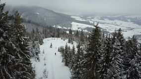 Aerial view of a skier moving through a forest among pine trees. Birds Eye View Above White Powder Snow - Winter Sports stock video footage