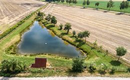 Aerial view of a small fishing pond between the harvested fields of a farm, with a row of trees and black sheep.  stock images