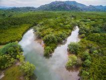 Aerial view of small river fork in mangrove forest stock photography