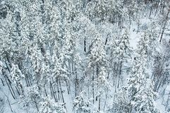 Aerial view of winter forest Stock Image