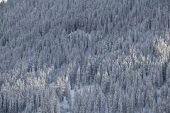 Aerial view of a snow-covered mountain forest, Switzerland Stock Photography