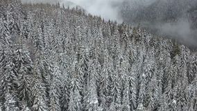 Aerial view of the snow-covered pine tree stock video