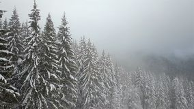 Aerial view of the snow-covered pine tree with fog.  stock footage