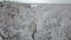 Aerial view of the snow-covered trees branches stock video footage